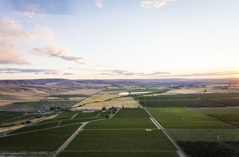 aerial view of Seven Hills Vineyard